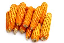 Dry Corn Isolate Royalty Free Stock Photography