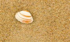 Free Sea Shell Stock Photos - 17034283