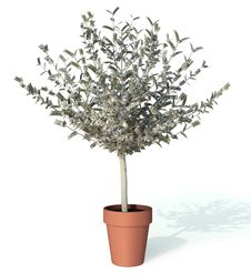Free Money Tree Stock Photos - 17034483