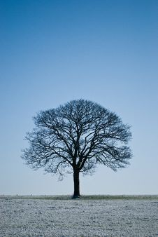 Free Lone Tree Stock Images - 17035714