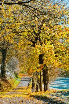 Free Autumn Stock Image - 17036581