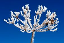 Free Hoarfrost Stock Images - 17036604