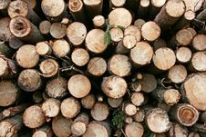Free Logs. Royalty Free Stock Image - 17037696