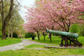 Free Cannon Park In Spring Royalty Free Stock Photography - 17041407