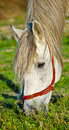 Free Horse Eating Grass Royalty Free Stock Images - 17044759