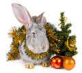Free Rabbit And Christmas Decorations Royalty Free Stock Photo - 17045655