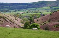 Free A Rural Landscape In Shropshire, England Stock Images - 17041444