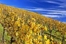 Free Vineyard Stock Image - 17041731