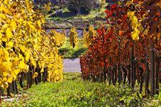 Free Vineyard - The Autumn Season Stock Photography - 17041932