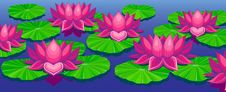 Free Lotuses Royalty Free Stock Photo - 17042115