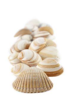 Bunch Of Seashells Stock Images