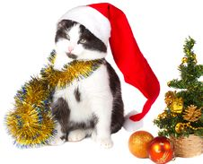 Free Kitten As Santa Claus And Christmas Tree Stock Photo - 17043780