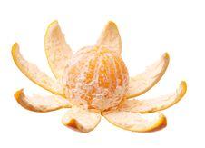 Free Orange Stock Photo - 17044050