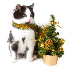 Free Kitten And Christmas Decorations Royalty Free Stock Photos - 17044768