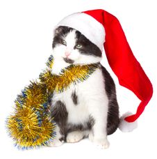 Free Kitten As Santa Claus Royalty Free Stock Photo - 17044885