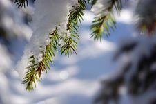 Free Winter Background Royalty Free Stock Photo - 17045235