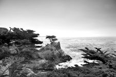 Free Lonely Pine At The 17-Mile Drive Royalty Free Stock Images - 17045329