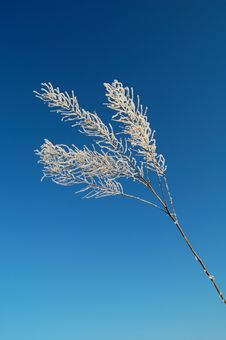 Free Bare Frozen Branch Under The Blue Sky Stock Photography - 17045482