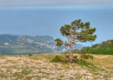 Free Pine Tree Against Black Sea Royalty Free Stock Image - 17045576