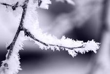 Free Frozen Snowflakes Royalty Free Stock Image - 17048466