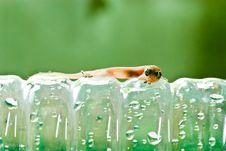 Free Closeup Of Little Lizard On Plastic Bottle Stock Photography - 17049632