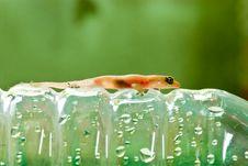 Free Closeup Of Little Lizard On Plastic Bottle Stock Photo - 17049650