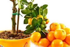Free Mandarin Stock Photography - 17053502