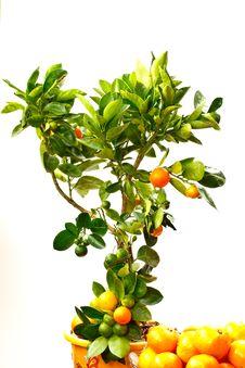 Free Mandarin Stock Images - 17053934