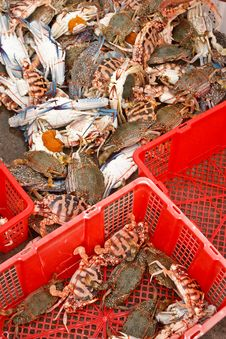 Free Fresh Crabs From Fishery Boat At Port Stock Image - 17056781