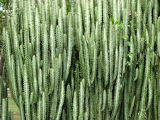 Free Green Wall With Cactus Royalty Free Stock Photography - 17056807