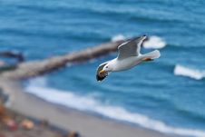 Sea Gull Above Surf Royalty Free Stock Photography