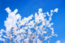 Free Hoarfrost On Branches Royalty Free Stock Image - 17059616