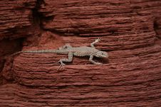 Free Lizard On Desert Red Rock Stock Photography - 17059632