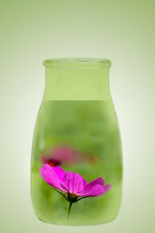 Free Flower In The Bottle Royalty Free Stock Photography - 17059717