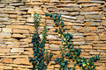 Free Old Stone Wall Texture With Some Ivy Stock Photo - 17062030