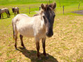 Free Horse On Field Royalty Free Stock Image - 17063226