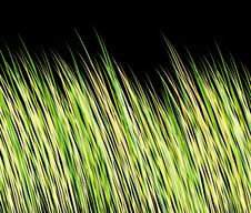 Free The Texture Of The Grass Stock Image - 17060161