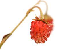 Free Strawberries. Stock Photo - 17061340