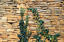 Old Stone Wall Texture With Some Ivy Stock Photo