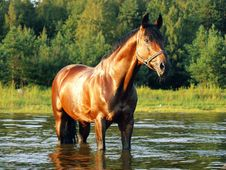 Free Horse In The Gulf Stock Photos - 17063403