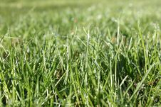 Free Grass Stock Image - 17063551