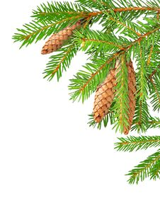 Free Fir Branches Stock Images - 17064684