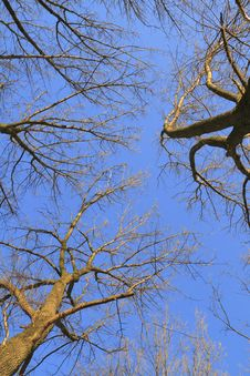 Free Tree Crowns On Deep Blue Sky Royalty Free Stock Photo - 17065005