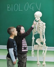 Free Learn Biology In School Stock Photography - 17065442