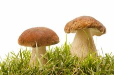 Free Boletus Edulis Stock Photos - 17065563