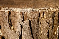 Free Tree Bark Stock Image - 17066251