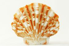 Free Scallop Seashell Royalty Free Stock Photos - 17067748