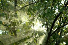 Free Rain In A Tropical Forest Stock Images - 17067784