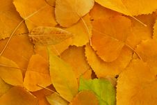 Free Autumn Leaves Background Royalty Free Stock Photography - 17068157
