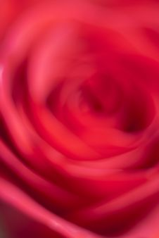 Free Soft Red Rose Stock Photos - 17068353